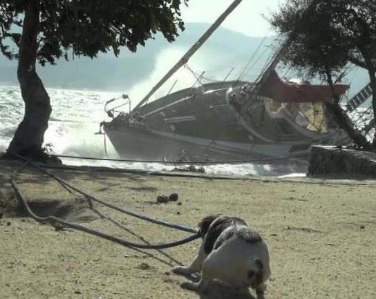 dog hauling boat.jpg