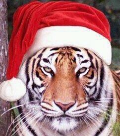 Clemson Christmas.JPG